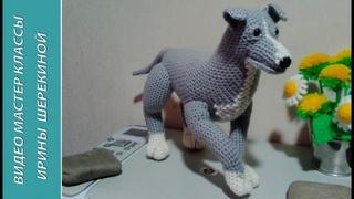 Питбуль, ч.3. Pitbull. р.3. Amigurumi. Crochet.  Амигуруми. Игрушки крючком.