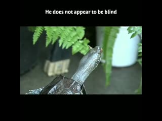 Черепаха с рогами Это что-то новенькое.