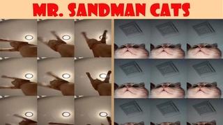 Mr. Sandman Cats Compilation