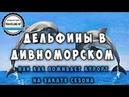Дельфины приплыли на берег Черного моря!А так же Дивноморское на закате сезона. Геленджик 2020.
