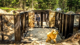Building a DIY Basement for my OFF GRID LOG CABIN in the WILDERNESS | Aggressive Bear Visits