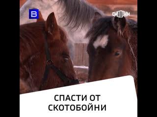 Спасение животных: волонтеры открывают приюты для лошадей