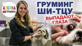 Груминг ши-тцу, уход за шерстью, особенности мытья, гигиеническая стрижка дома