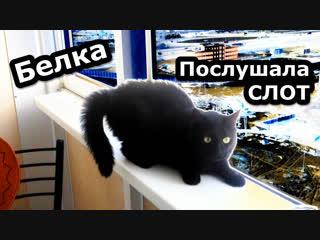 Белка Послушала Новый Альбом СЛОТА