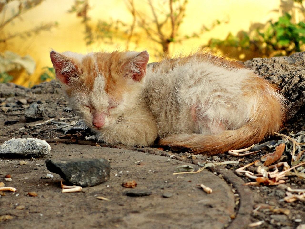 Бездомный котенок фото