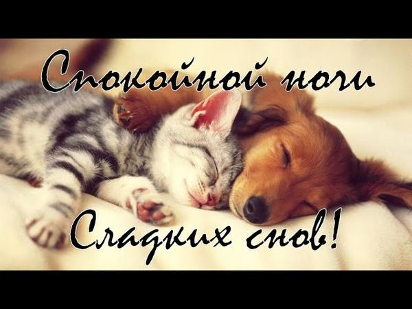 Спокойной ночи Сладких снов 😴🌟 Красивое Пожелание