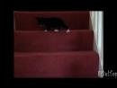 Смешное видео про животных. Животные на лестнице смешно до слез_HD.mp4