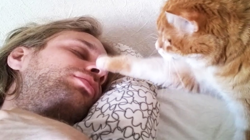 Cats waking up their owners by cute paws Cutest Fur Alarm Clock