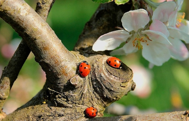 Приманка для полезных насекомых в сад и огород.