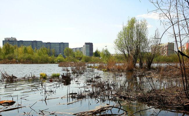 В мэрии и Минлесхозе отреагировали на информацию о загрязнении водоема в Пензе
