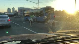 Две девушки на лошадях пронеслись по проспекту среди машин