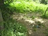 Прогулки по Безымянке, часть 4 поиск места для купания