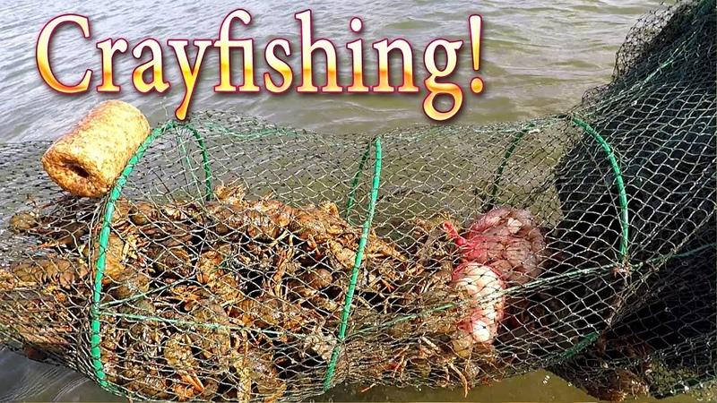 Сrayfishing! Меняем Приманку на Мидии ПЕРЛОВИЦА-БЕЗЗУБКА!