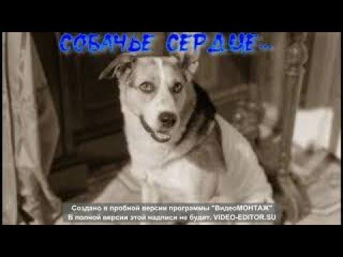 Общение с астралом собаки диагностика Центр гипноза и энергоинформационных технологий Центр развития