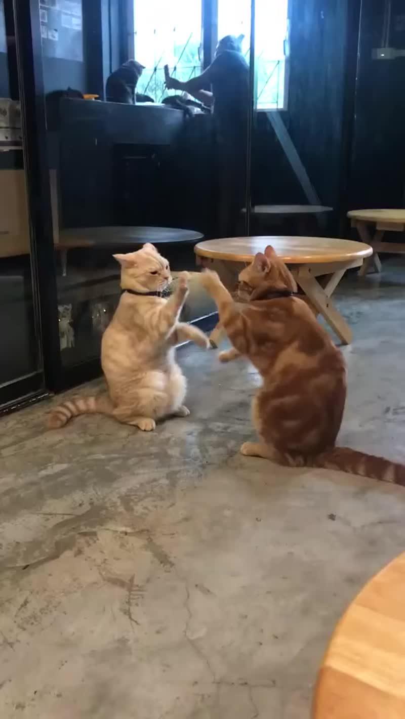 Мои кошки играют в ладошки