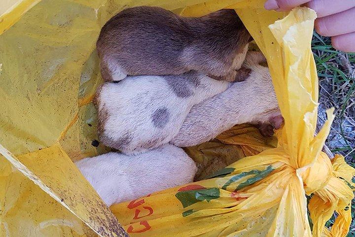 В Полоцке кто-то повесил высоко на дереве пакет со щенками. Животных спасли горожане и МЧС