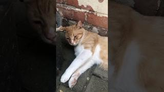 Кот Мурзик ))) I love cats very much