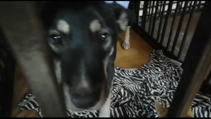 Вчера в Нижневартовске была экстренно стерилизована собака
