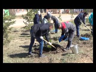 Пятьдесят новых сосен - на улицу Бамбурова
