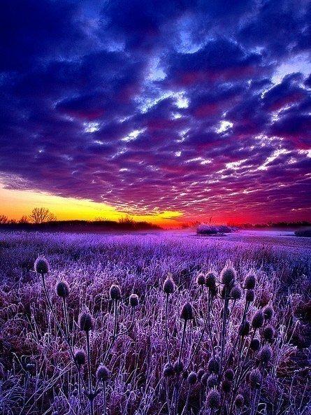 Мир прекрасен. И прекраснее всего без людей... Эрих Мария Ремарк