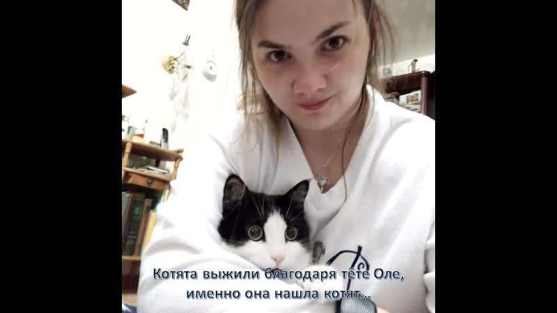 Подари жизнь! Шмидт Елизавета, 7 лет, МАОУ СШ № 1 им. М. Аверина г. Валдай