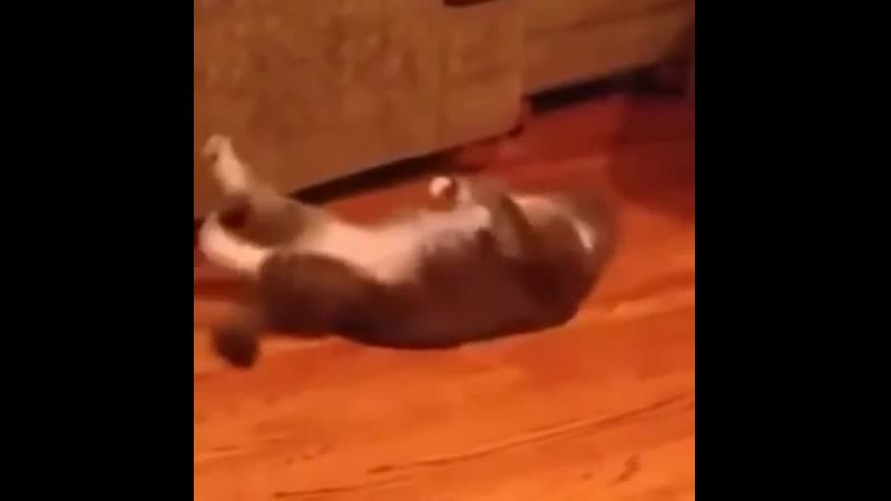 Cat did it so you also can