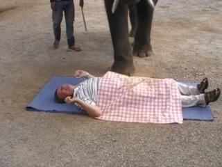 Очень  смешно!!!Тайский эротически-слоновий массаж