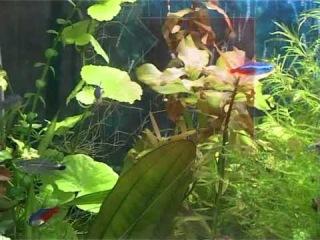Жизнь с животными, аквариумные рыбы. Часть 2
