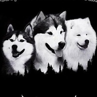 Северные Ездовые Собаки Саранск