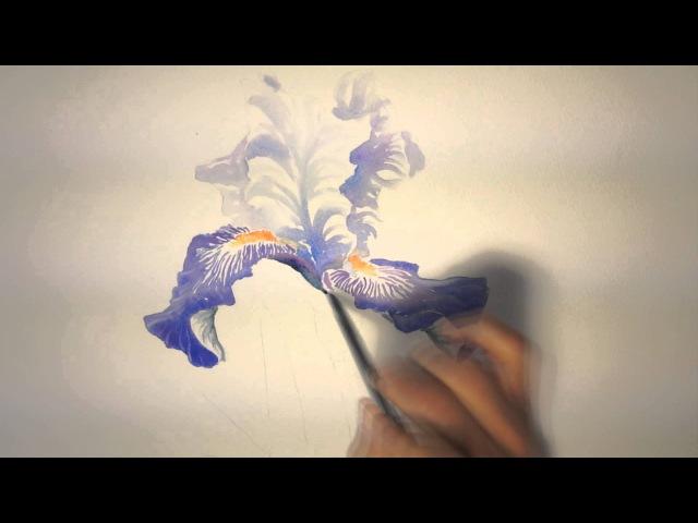 Un iris à l'aquarelle watercolor tutorial