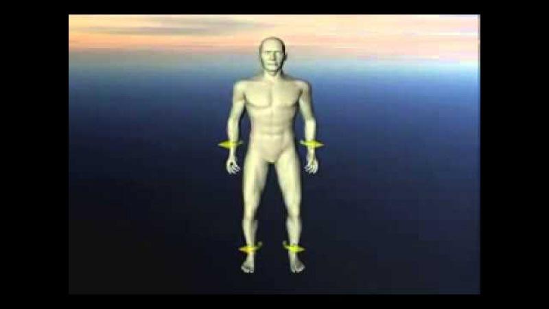 Краниосакральный ритм Флексия и экстензия в теле человека Краниосакральная система