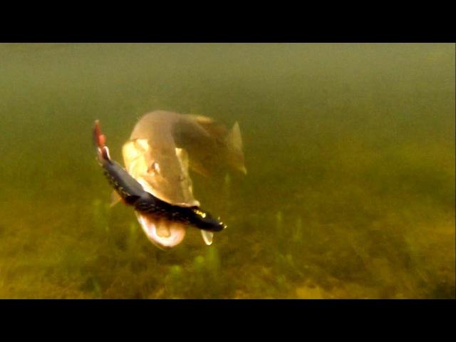 Cool pike attack Ricky Mike. Fishing lures softbaits f. bass muskie zander catfish. Рыбалка щука.