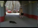 Ералаш №241 Чёрная кошка