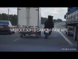 Прикол: медведь на мотоцикле едет по трассе!