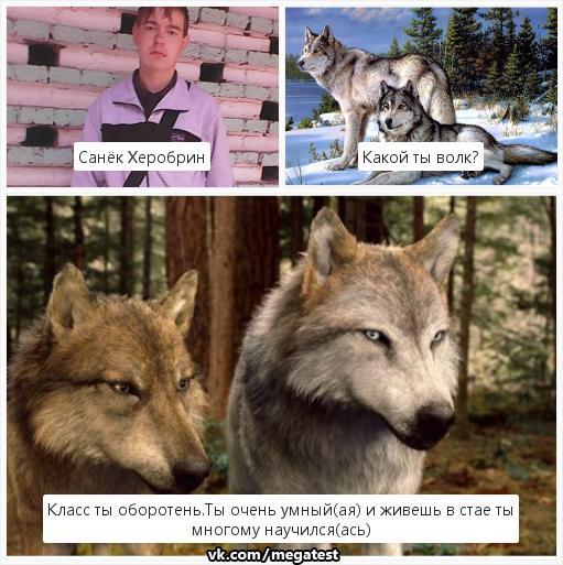 тесты про волков в картинках многие женщины очень