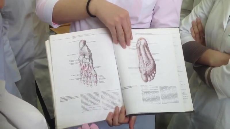 Мышцы нижней конечности Mm membri inferioris д м н проф Романюк С Н