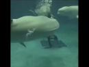 Даже дельфины пускают кольца лучше тебя