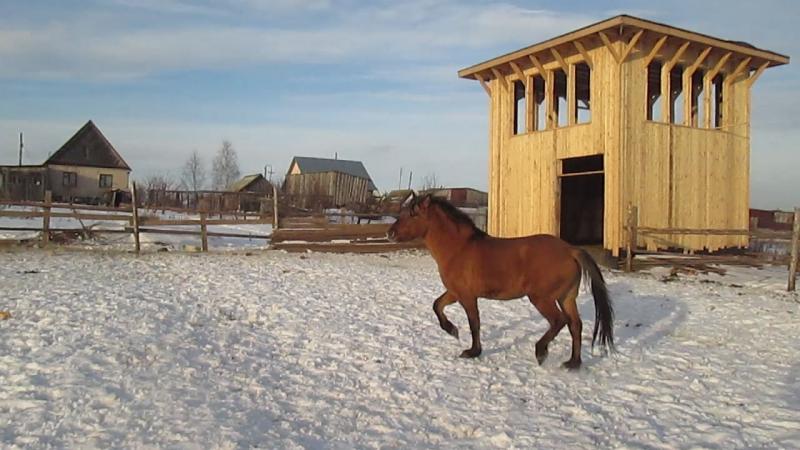 Конь Коней Лотос Мун ибн Ламбада Малыш Юферев ибн мой 12 12 15
