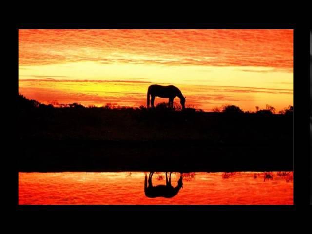 Konie w oprawie czerwonych gitar- Wschód słońca w stadninie koni...