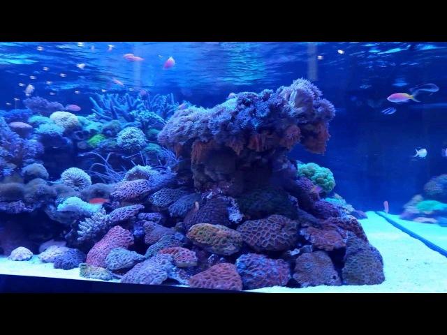 DeJong MarineLife Interzoo 2016