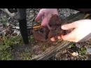 Вред и польза чаги Березовый гриб