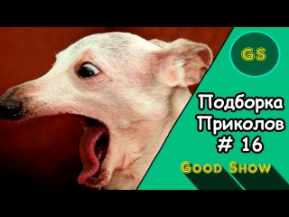 Годная Подборка Приколов #16   Good Show