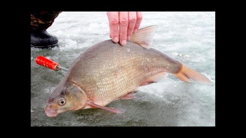 Зимняя рыбалка на реке Ока Ловля белой рыбы на покаток дергуша