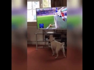 Dog loves the game