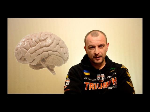 Работа мозга перед боем Бледность лица Дефекация Мозг союзник или враг спортсмена hf jnf vjpuf gthtl jtv ktlyjcnm kbwf