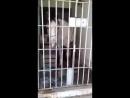 Cavalo é preso por dar coice em carro