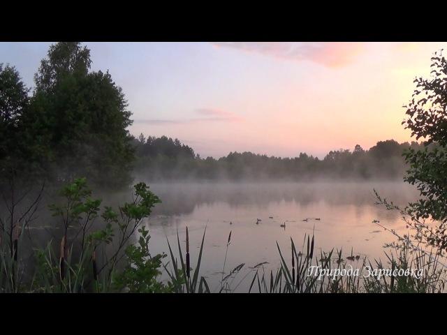 Сиреневый Туман Утром на Озере со Звуками Природы 1 Час Видео для Релаксации Медитации Для массажа Для души Для Йоги