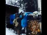 Необычная гостья у охотников в Якутии