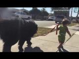 Ребёнок и собакен на прогулке