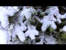 Зима. Заснеженные Ели. Зимние Елки в Снегу.